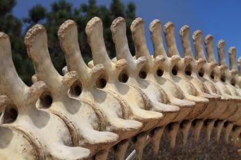 Gray whale vertebrae, Cabrillo National Monument, San Diego, California