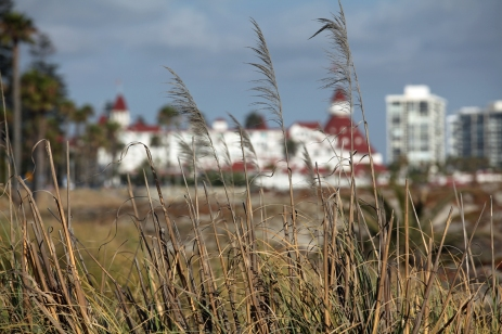 Sea grass, Hotel del Coronado, Coronado, California
