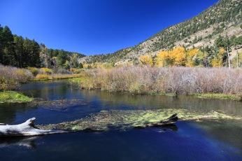 Cimarron Canyon, New Mexico