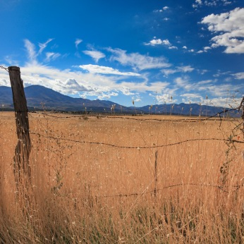 Utah Wheat