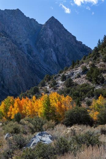 Autumn Colors, Grant Lake, California