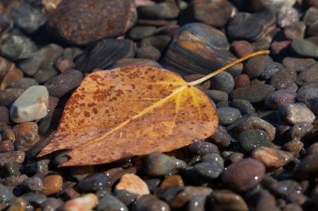 Aspen Leaf, Lake Tahoe, California