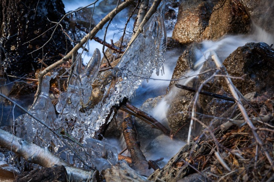 Ice formation on fallen branches, Whitney Portal