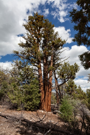 Along hiking trail at Big Bear Discovery Center