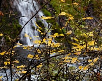 Autumn leaves at McArthur-Burney Falls