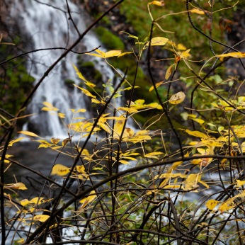 Autumn leaves at McArthur-Burney Falls