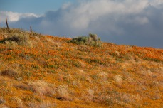 Near Antelope Valley California Poppy Reserve