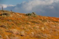 Near Antelope Valley California Poppy Reserve